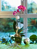 Christmas window decoration with an orchid