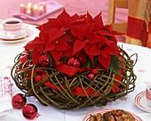Weihnachtsstern in einem Weiden-Kranz mit Weihnachtskugeln