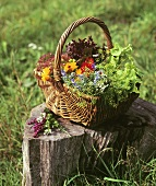 A basket of lettuce and flowers out of doors
