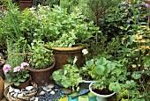 Various herbs in pots in garden