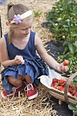 A blonde girl picking strawberries
