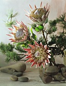 Christmas arrangement of protea and pine branches