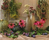 Still life with purple coneflowers, herbs, plums & pumpkins