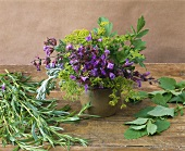 Flowering sage, lovage, tarragon and lemon balm
