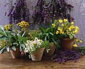 Lavender, tansy, ribwort plantain, evening primrose, chamomile, sage
