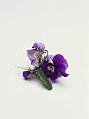 Violets (also wine bouquet)