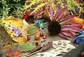 Autumnal still life with flowers, leaves and seed heads