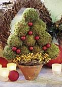 Ein Weihnachtsbäumchen aus Moos