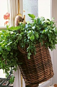 Basket of parsley