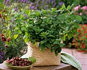 Mint in woven basket and a plate of gooseberries