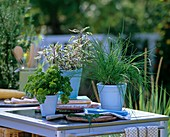 Parsley, sage and chives on outdoor kitchen unit
