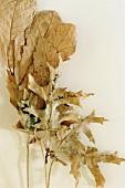 Blätterarrangement vor weißem Hintergrund