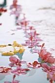 Pink hibiscus flowers floating in water