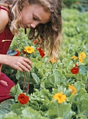 Mädchen pflückt Blumen im Garten für ein Reagenzglas