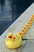 Family of rubber ducks