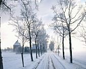 Winter landscape with avenue of trees
