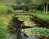 Garden with pond and aquatic plants