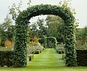 Garden with ivy-covered arch