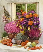Colourful autumn flowers in front of a window