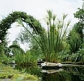 Pond with aquatic plants