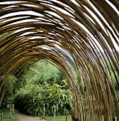 Archway of bamboo canes