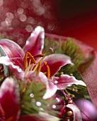 Weihnachtliche Dekoration mit roter Lilienblüte (Close-up)