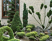 Garden with mixed conifers