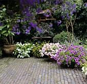 Flowering summer plants in pots in garden