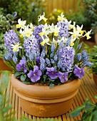 Fragrant spring flowers in terracotta pot