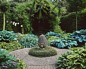 Ornamental garden with hostas