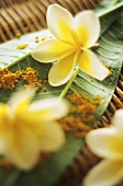 Frangipani flowers and curry powder