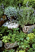 Various culinary herbs in a garden