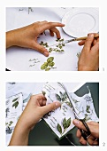Pasting pictures of herbs