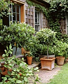 Plants in front of a wooden house