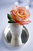 A peach-coloured rose in a vase