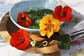Nasturtium flowers in a dish