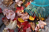 Autumnal leaves and a rake