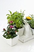 Fresh herbs and flowers in pots on a carrying tray