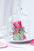 Rose in a wire basket under a cloche