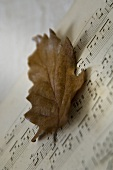 Music book with an autumn leaf (close-up)