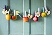 Äpfel hängen an einer Wäscheleine