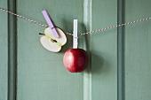 Äpfel hängen auf Wäscheleine