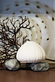 Maritime decoration (sea urchin, pebbles, coral)
