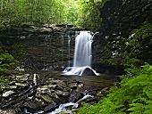 Waterfall (West Virginia, USA)