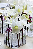 White narcissi (table decoration)