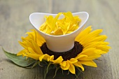 Small bowl of sunflower petals on sunflower