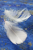 Two white feathers on a blue background