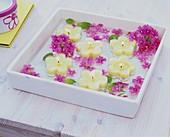 Eisenkrautblüten und Schwimmkerzen in viereckiger Schale