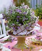 Table decoration of borage flowers