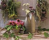 Echinacea, mugwort, oregano, yarrow, fennel
